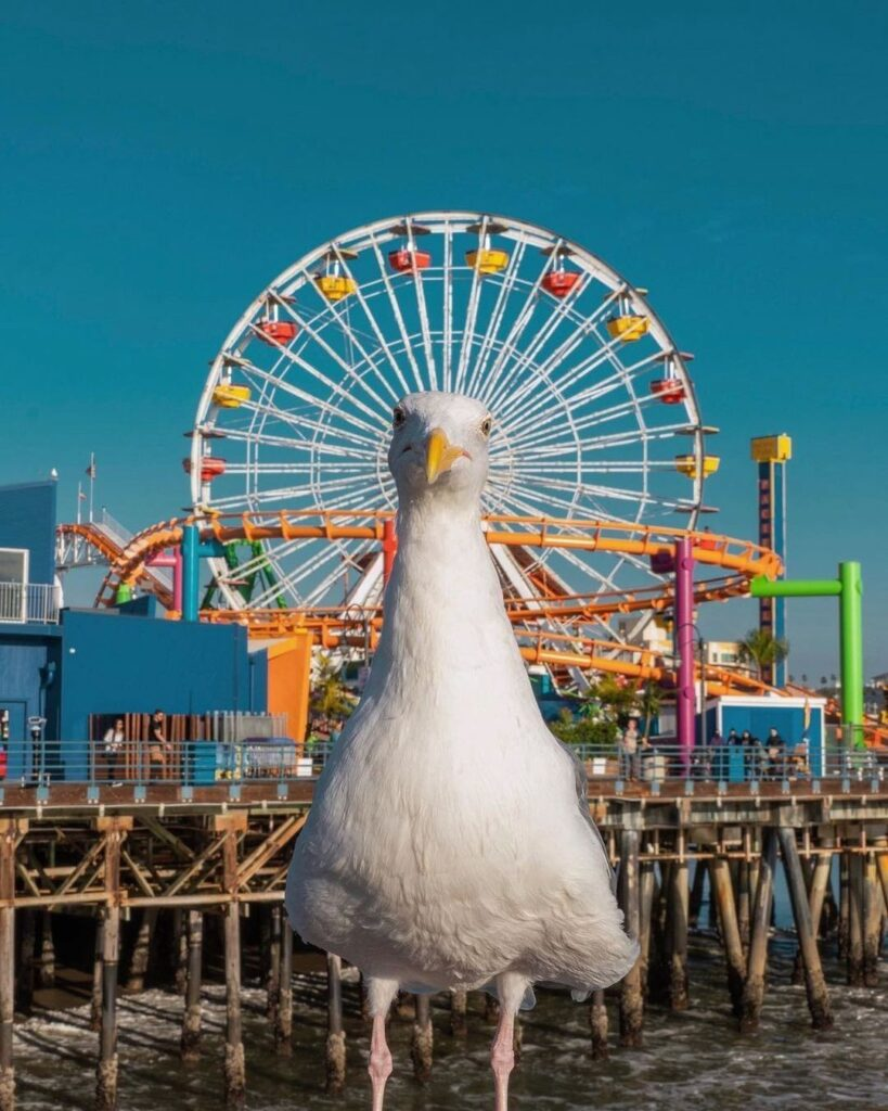 funny animals doing funny things seagull crown