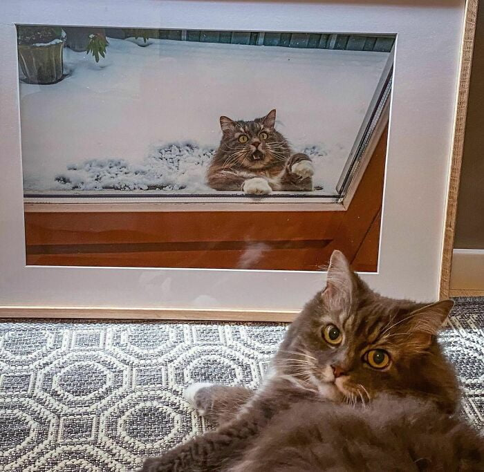 funny animals doing funny things cat looks at photo