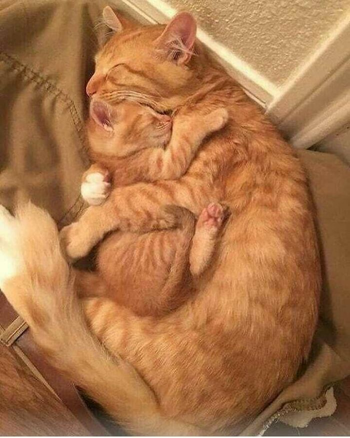 two funny cats hugging