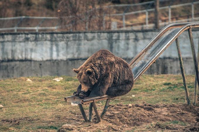 funny bear on the kids slide