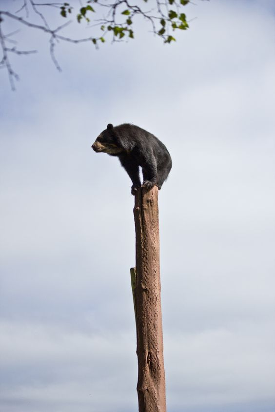funny bear on top of a pole