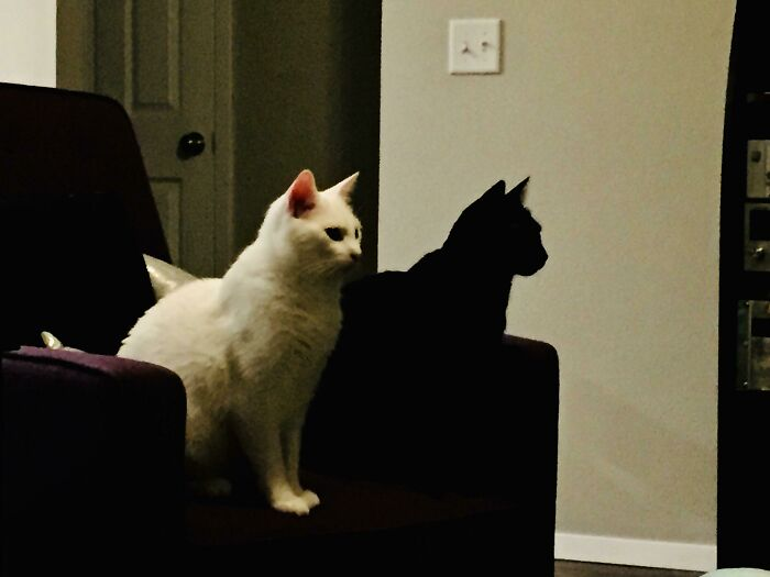 two funny cats white and black