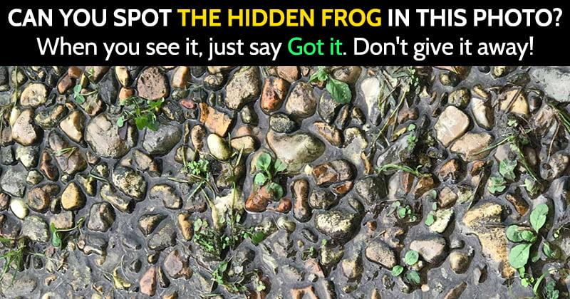 hidden animal riddle